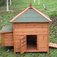 High Quality Chicken Coop with Nesting Box & Shingled Roof